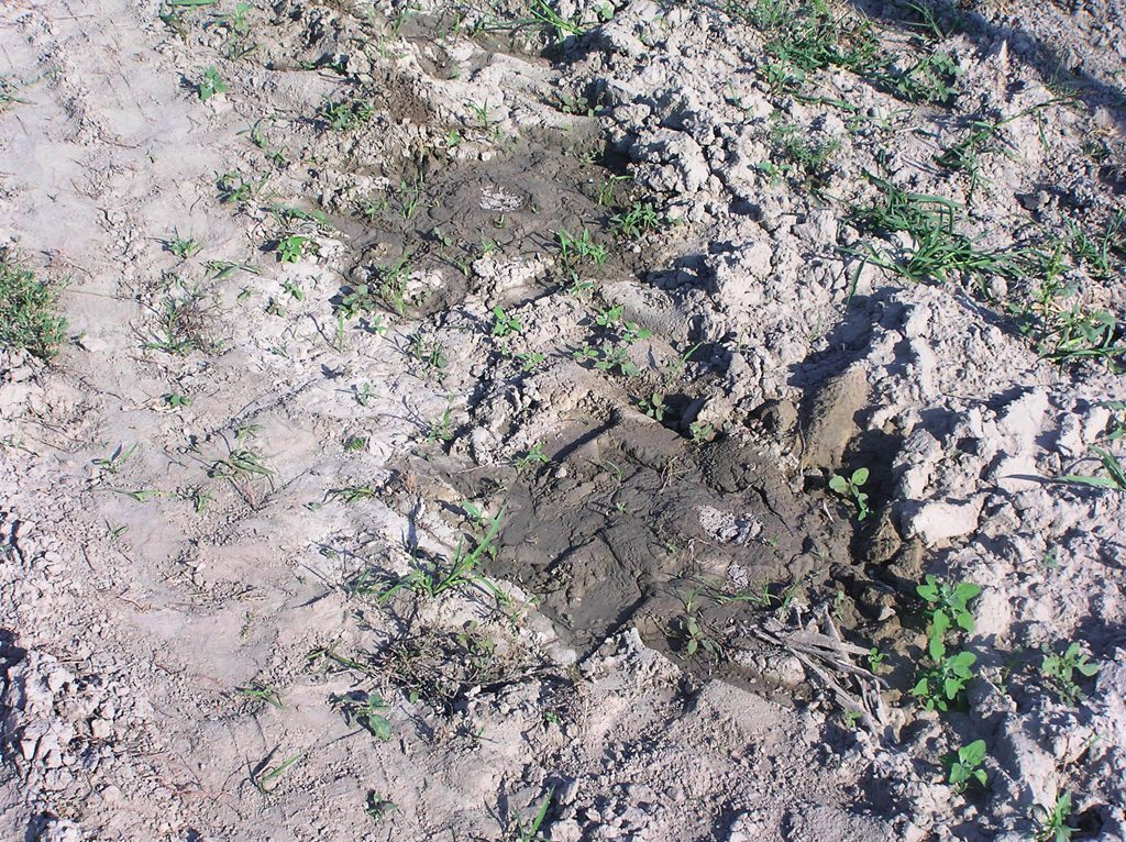 Eltemetett csepegtetőcső. (forrás: www.aquarex.hu)