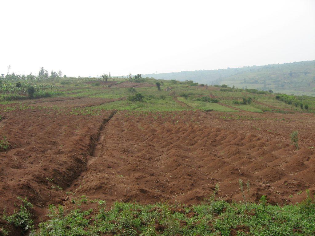 Esővíz tárolás (Water harvesting) (forrás: www.aquarex.hu)